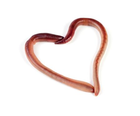 Dos lombrices en forma de corazón aisladas sobre fondo blanco. Foto de archivo - 81658311