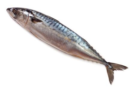 One fresh mackerel isolated on white background Imagens