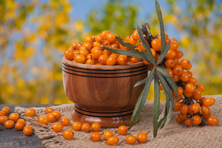 argousier: Sea-buckthorn berries in a wooden bowl on table with blurred garden background