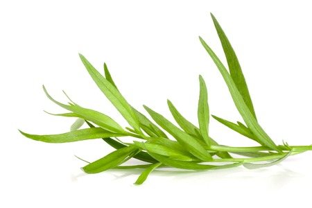 Sprig of tarragon isolated on a white background. Artemisia dracunculus Stock Photo