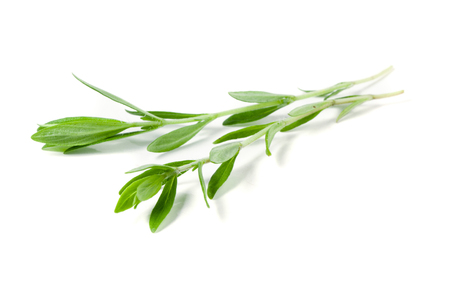 wild marjoram: Sprig of fresh thyme isolated on a white background Stock Photo