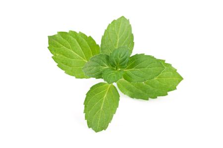 lemon balm: fresh mint leaves isolated on white background.
