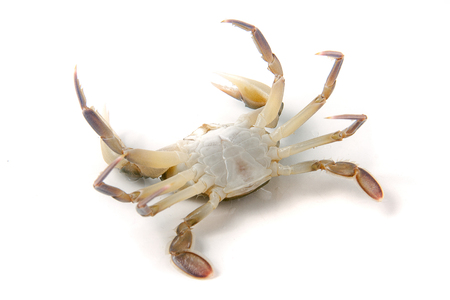 Live crab lying on the back isolated on a white background.
