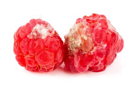 Raspberry spoiled isolated on white background macro Stock Photo