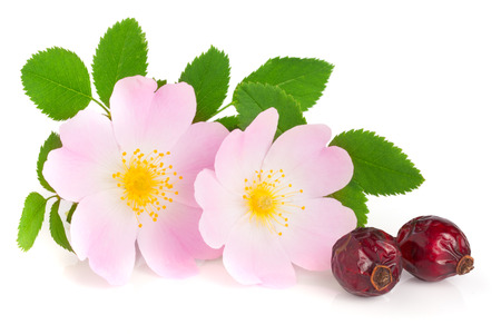 roze: Rosehip flower and berry with leaf isolated on white background
