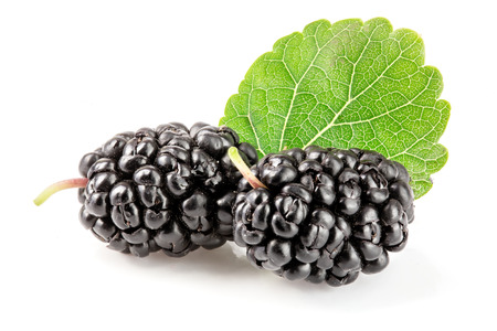 Mulberry berry with leaf isolated on white background macro