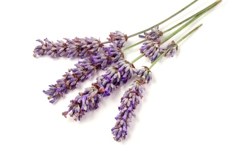 Twig of lavender isolated on a white background Stock Photo
