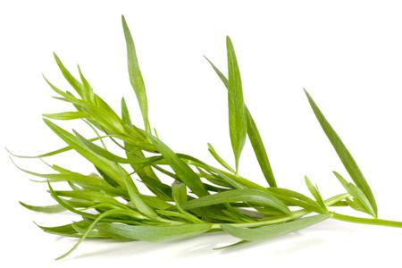 dragon geïsoleerd op een witte achtergrond. Artemisia dracunculus
