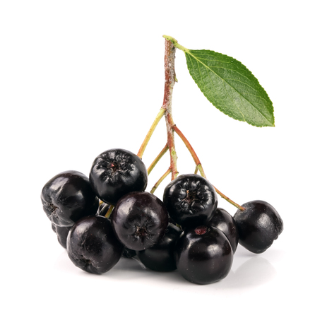 白い背景で隔離の葉チョークベリー。黒アロニア果実