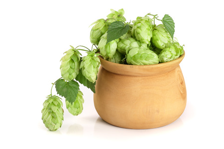 hop cones in a wooden bowl with leaf isolated on white background close-up. Top view Stock Photo