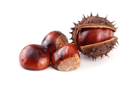 chestnut isolated on white background closeup Stock Photo