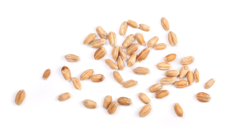 wheat grains isolated on white background. Top view.