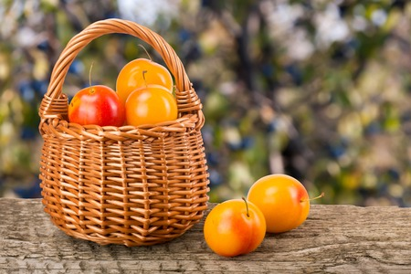 old desk: yellow plums with leaf in a wicker basket on a wooden table with a blurry garden background Stock Photo