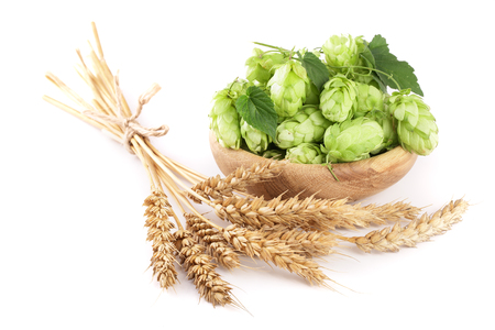 brewery: hop cones in a wooden bowl with ears of wheat isolated on white background close-up