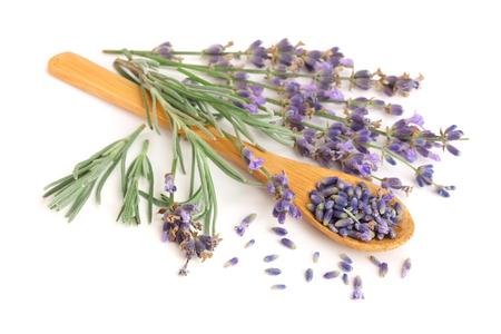 sprigs of fresh lavender and dried in spoon isolated on white background