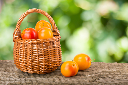 old desk: yellow plums with leaf in a wicker basket on a wooden table with a blurry garden background. Stock Photo