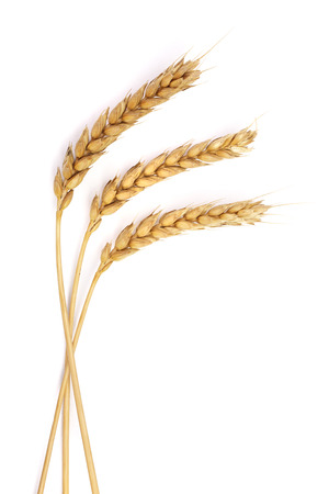 three ears of wheat isolated on white background. Top view
