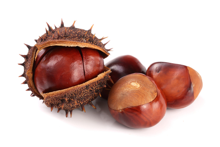 chestnut in the skin isolated on white background closeup Stok Fotoğraf