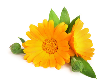 Calendula. Marigold flower with leaf isolated on white background Imagens - 88748684