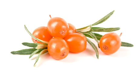 Sea buckthorn. Fresh ripe berry with leaves isolated on white background macro.