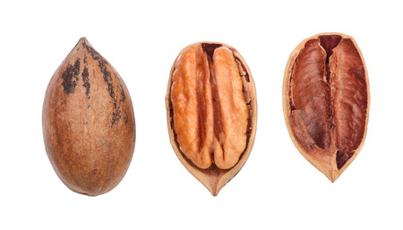 pekan: Single pecan nut isolated on white background, set of three different foreshortenings. Top view.