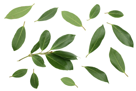 laurel isolated on white background. Fresh bay leaves. Top view. Flat lay pattern.