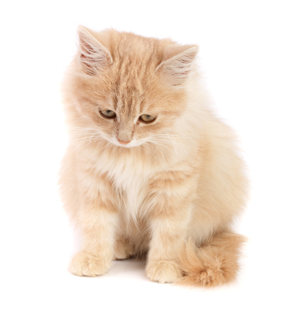 Cute little red kitten isolated on white background. Stock Photo