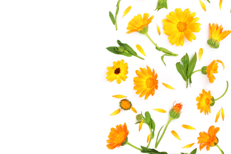 Calendula. Marigold flower isolated on white background with copy space for your text. Top view Zdjęcie Seryjne