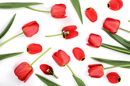 red tulips isolated on white background. Top view. Flat lay pattern. Stock Photo