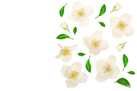 jasmine flower decorated with green leaves isolated on white background closeup with copy space for your text Фото со стока