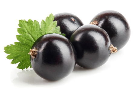 black currant with leaf isolated on white background. Standard-Bild