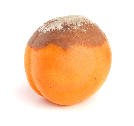 rotten apricot isolated on white background closeup