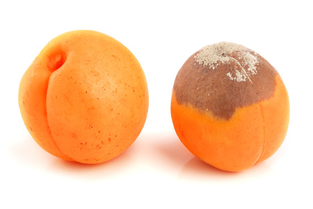 rotten and good apricot isolated on white background closeup