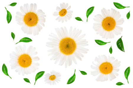 chamomile or daisies isolated on white background. Top view. Flat lay, Stok Fotoğraf