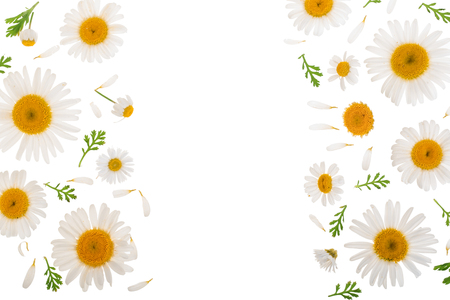 Chamomile or daisies with leaves isolated on white background
