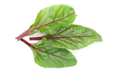 fresh beet leaf isolated on white background. Top view. Flat lay pattern.