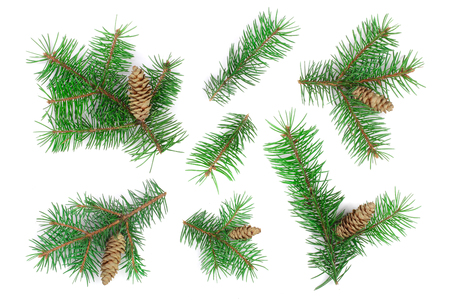 Fir tree branch with cones isolated on white background. Christmas background. Top view. 免版税图像