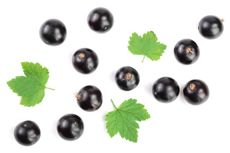 black currant with leaves isolated on white background. Top view. Flat lay pattern. 写真素材