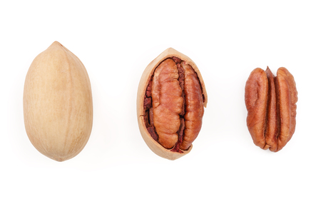 pecan nut isolated on white background. Set or collection. Top view. Flat lay