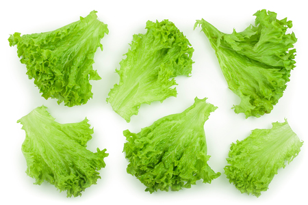 Lettuce leaf isolated on white background close up. Set or collection Stok Fotoğraf