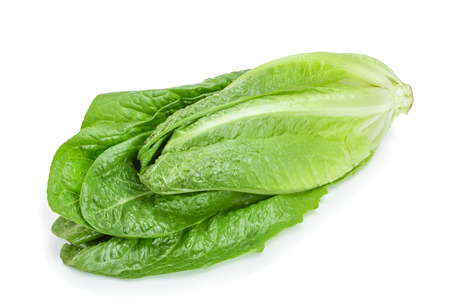 fresh roman cos lettuce isolated on a white background