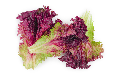 fresh red coral salad or lettuce isolated on the white background. Top view. Flat lay.