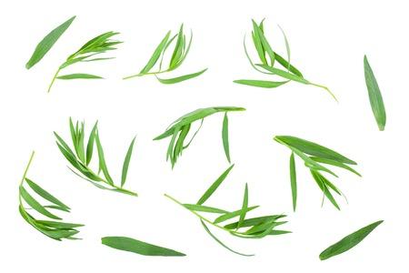 estragón o estragón aislado en un fondo blanco. Artemisia dracunculus. Vista superior. Endecha plana
