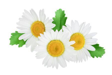 Una manzanilla o margaritas con hojas aisladas sobre fondo blanco.