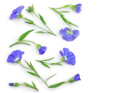 flax flowers or Linum usitatissimum on a white background with copy space for your text. Top view, flat lay Banque d'images - 128619251