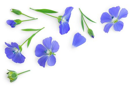 flax flowers or Linum usitatissimum on a white background with copy space for your text. Top view, flat lay Banque d'images - 128619256