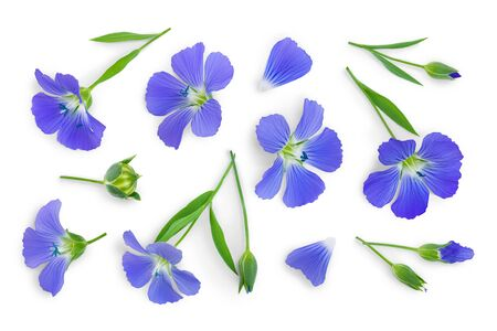Flowers seed flax or Linum usitatissimum isolated on white background . Top view, flat lay Stockfoto - 128619257