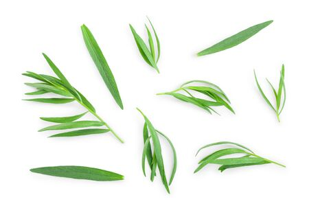 tarragon or estragon isolated on a white background. Artemisia dracunculus. Top view. Flat lay Stockfoto