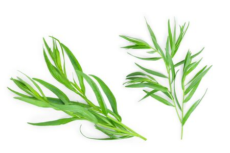 tarragon or estragon isolated on a white background. Artemisia dracunculus. Top view. Flat lay 免版税图像