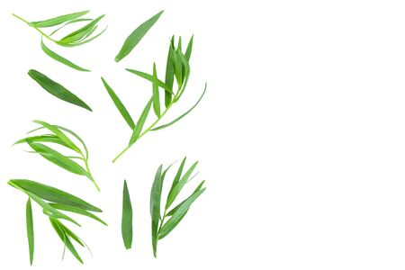 tarragon or estragon isolated on white background with copy space for your text. Artemisia dracunculus. Top view. Flat lay Imagens